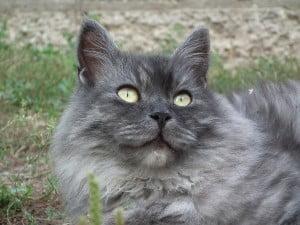 cat-216287_1280